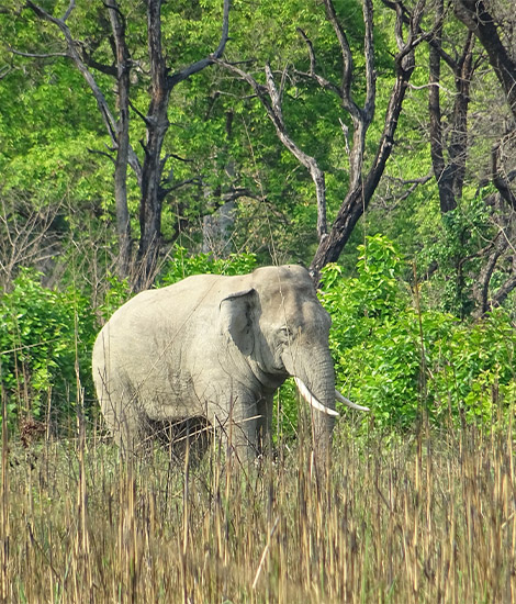 Elephant in natural habitat